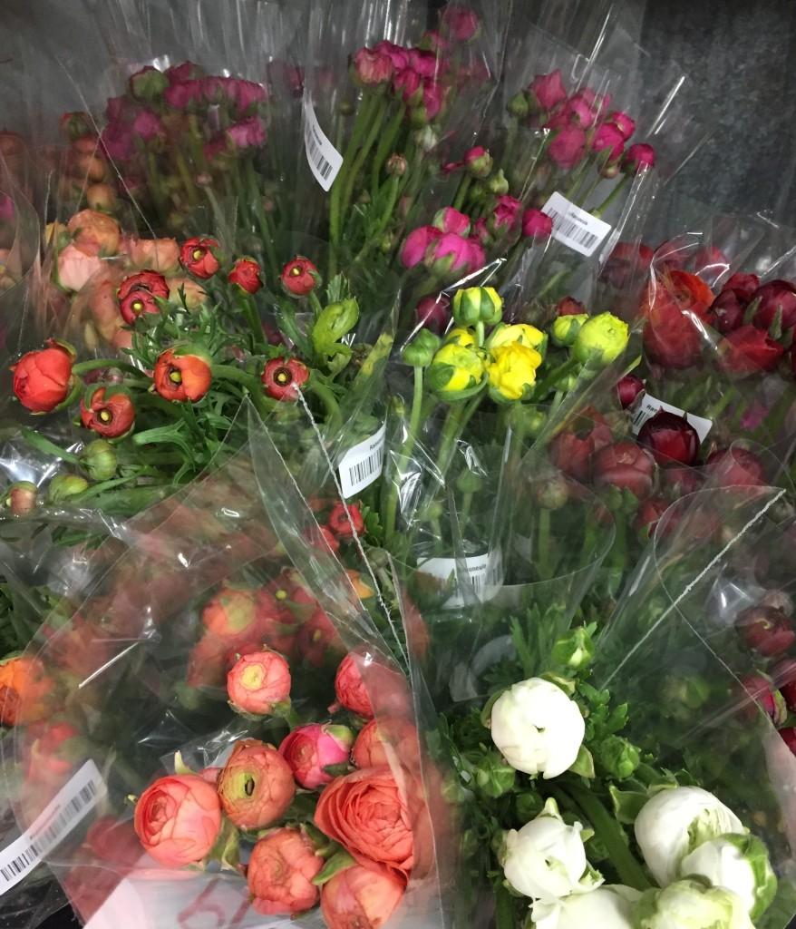 spring flowers ranunculus